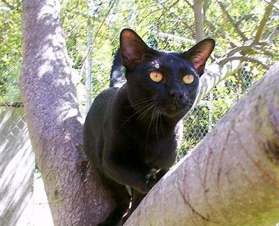 木に登っているマンダレイ