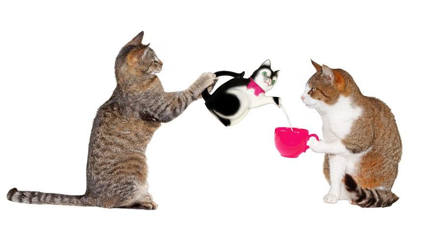 お茶をする2匹の猫