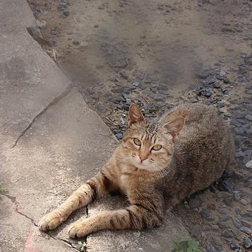 猫が前足を出して寝ている写真