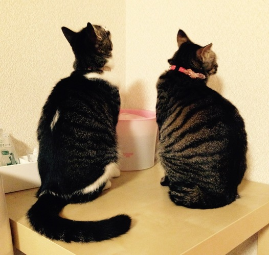 後ろを向いている猫の首輪シスターズ