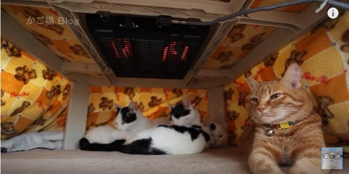 それでも寝続ける茶トラ猫