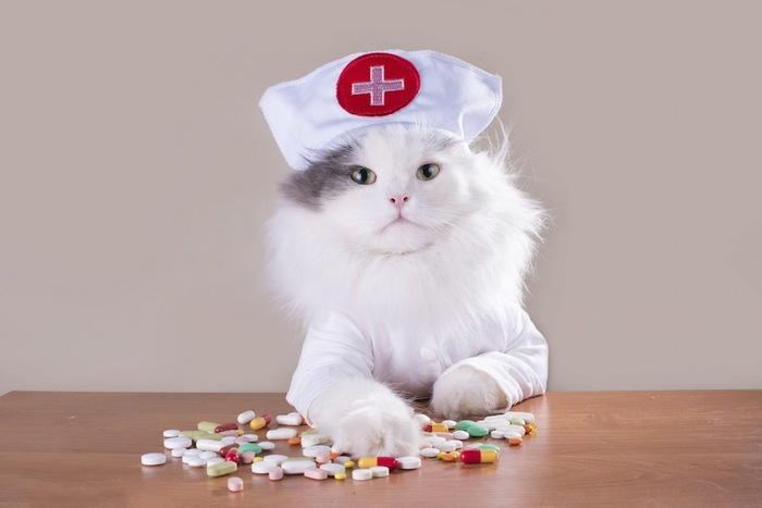 看護婦の格好をした猫