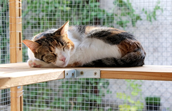 ケージで眠る猫