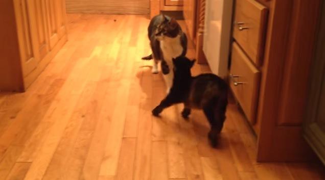 横を向く猫と跳ねるヤギ
