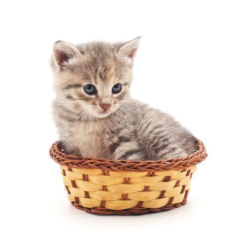 猫用かごベッドがきつそうな猫