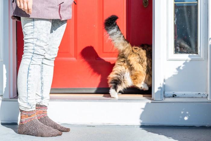 扉から家の中に入る猫