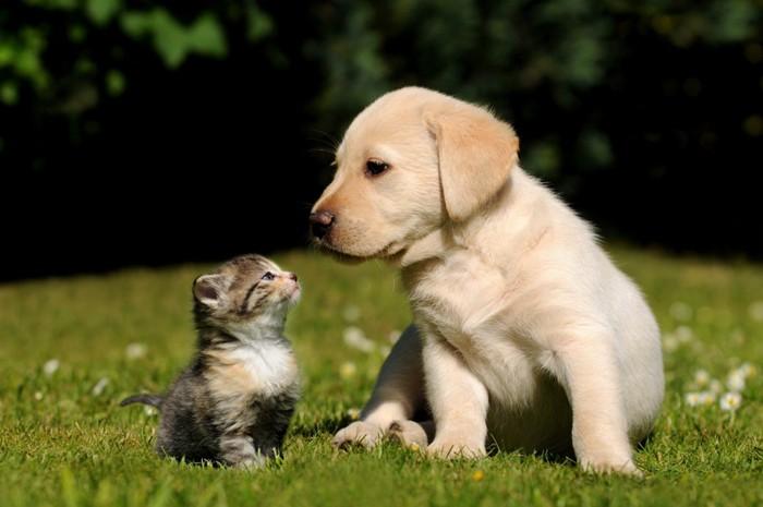 犬と顔を見合わせている子猫