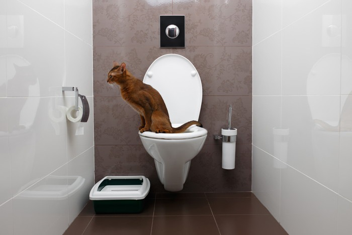 人用のトイレにいる猫