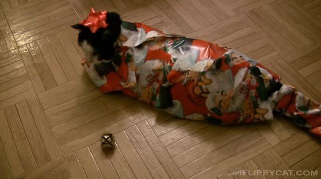 包装された猫(全身)