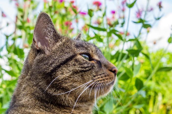 花を背景にしている猫