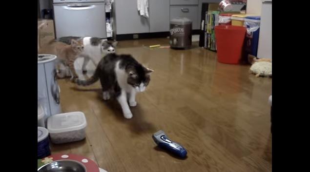 シェーバーに近付く猫