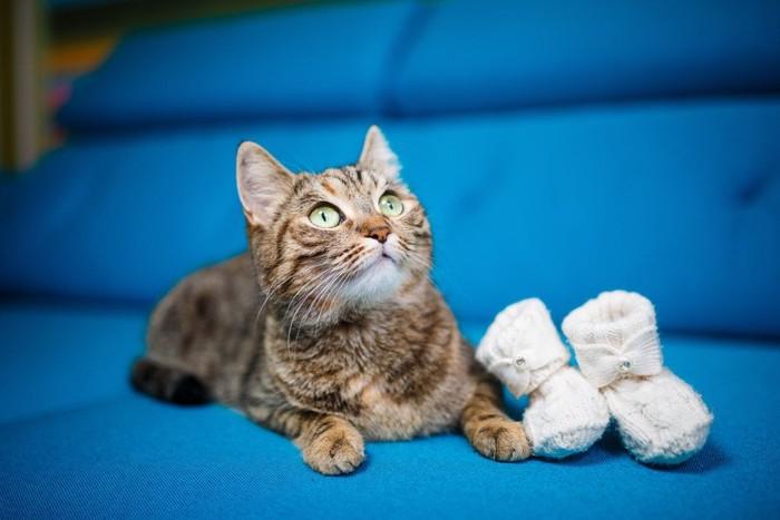 青いソファに座る猫と白い靴