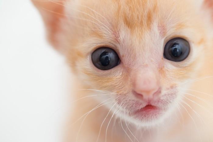 アップの子猫