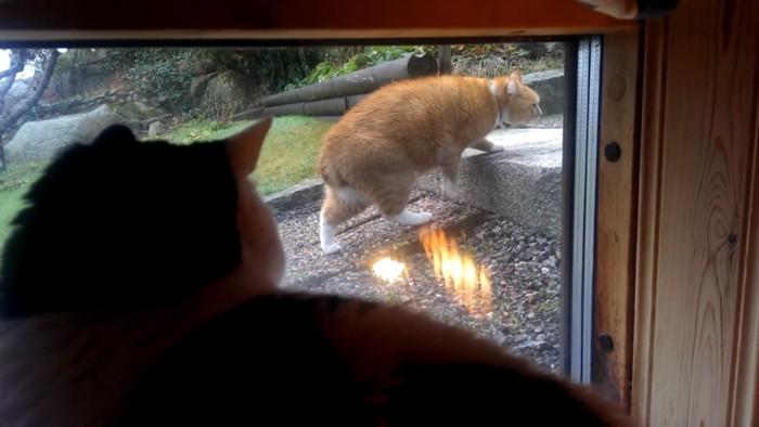 前足をかける猫