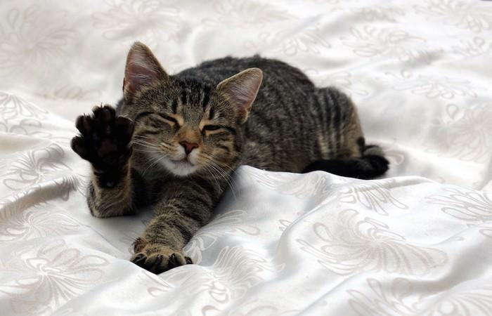 ベットの上で手を伸ばして眠る猫