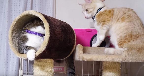 何が起こったのか振り返るサバトラ猫