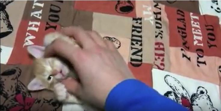 飼い主に顔を撫でられる子猫
