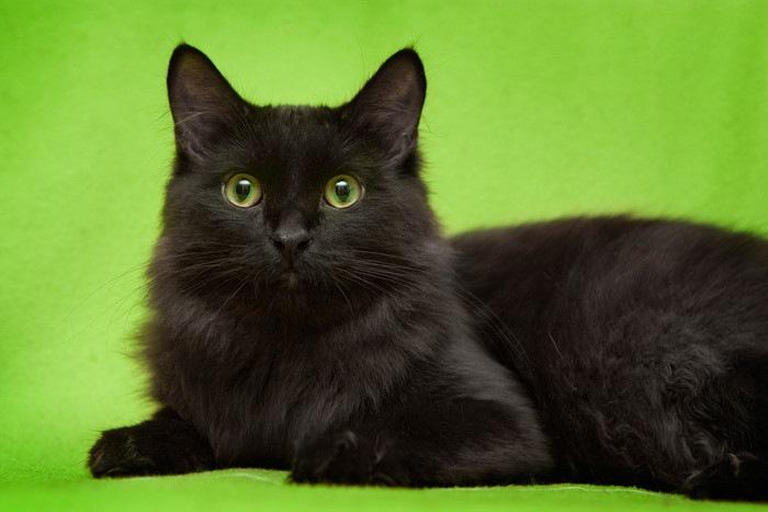 緑色のブランケットに乗る黒猫