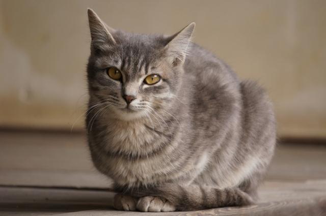 毛の長いネコ