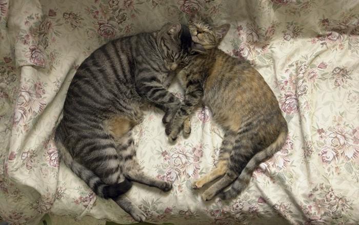 シンクロした茶トラの猫達