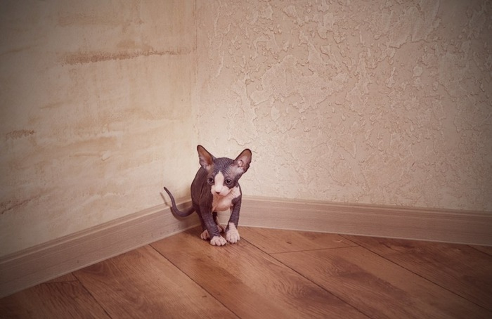 部屋の隅でマーキングをする粗相が治らない猫