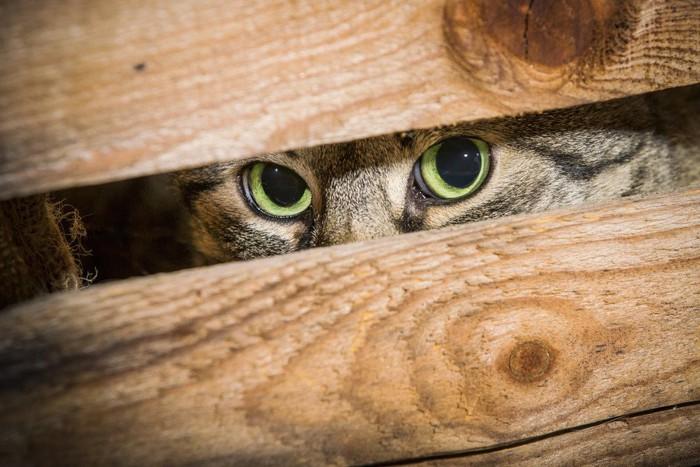 隙間からみる猫
