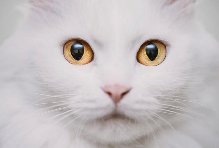 目を開く猫