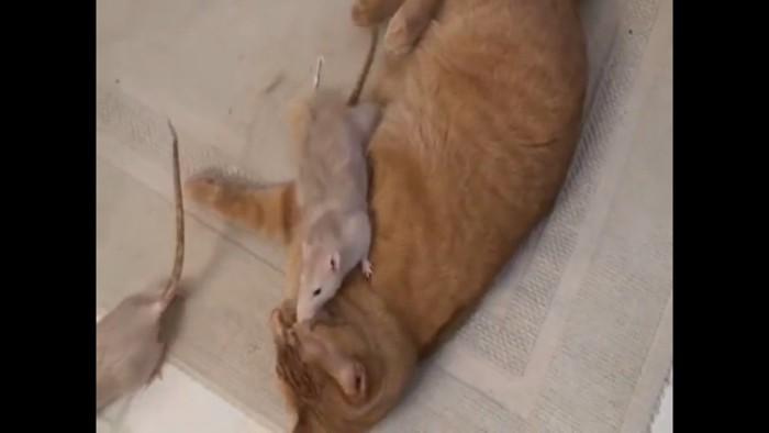 猫の上にのる