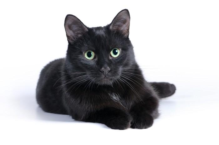 みつめる黒猫