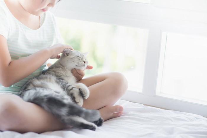 子供の膝の上で気持ちよさそうな猫