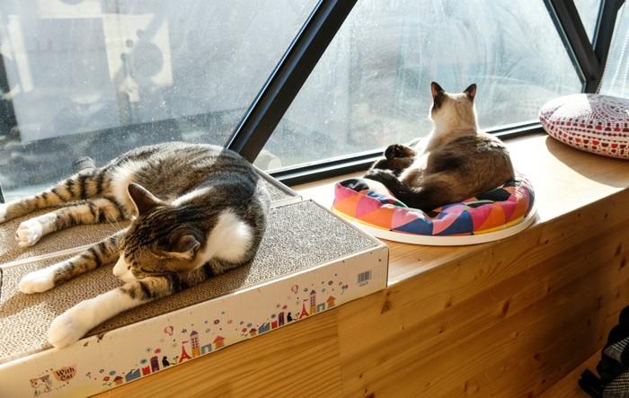 猫カフェにいる猫達