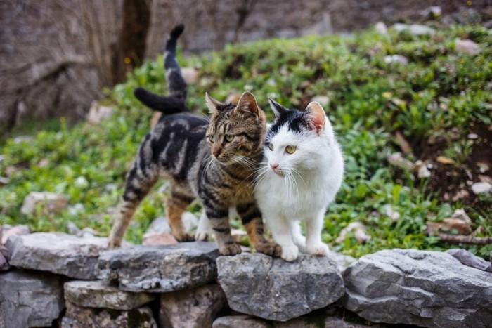 石垣の上にいる2匹の猫