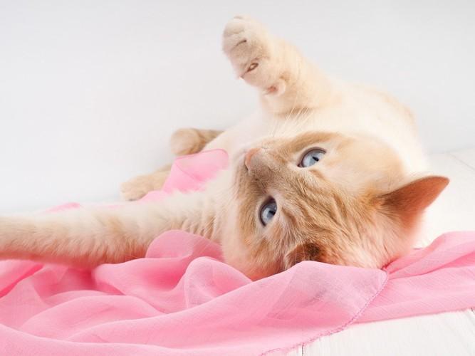 ピンクのシーツの上で寝転ぶ猫
