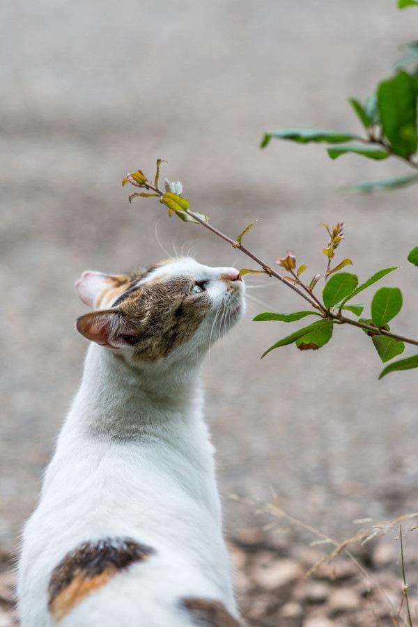 植物を嗅いでいる猫