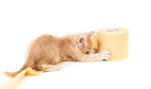 トイレットペーパーを掴む子猫