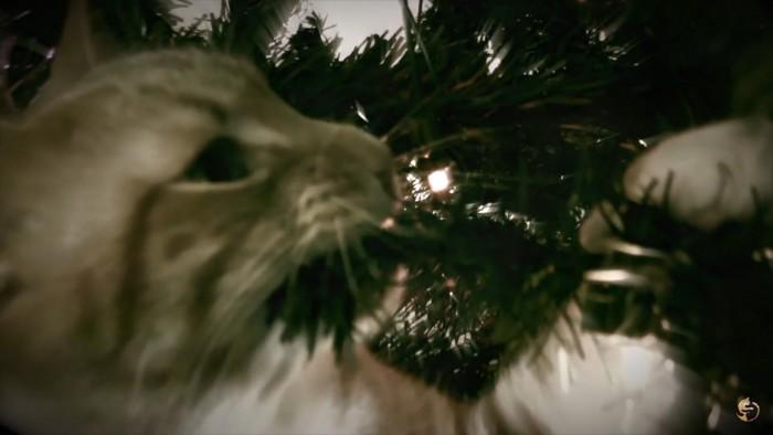 ツリーに噛み付く猫
