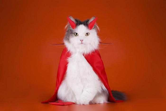 悪魔のコスプレをした猫