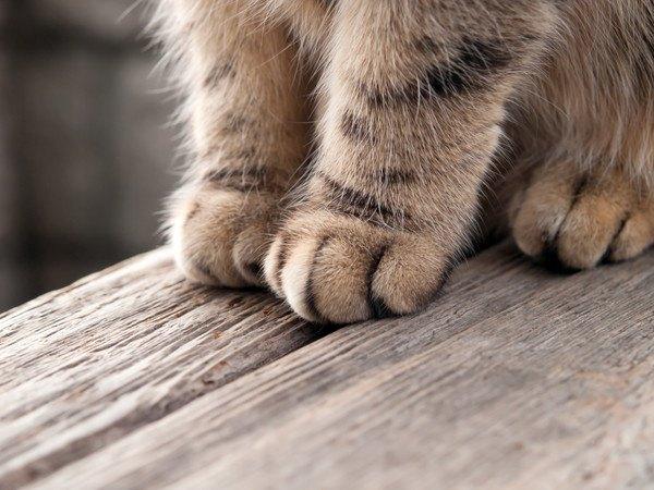 猫の足の部分のアップ画像