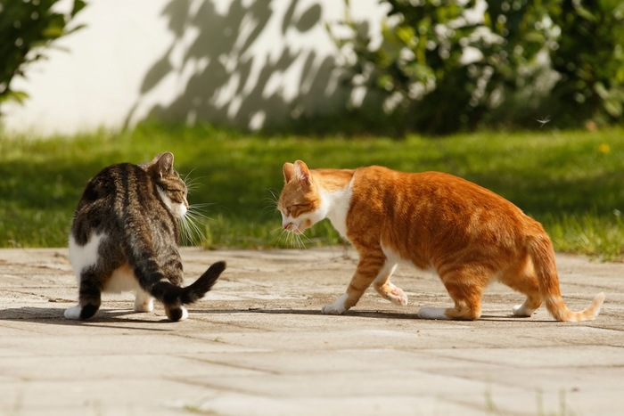 外で睨み合う2匹の猫