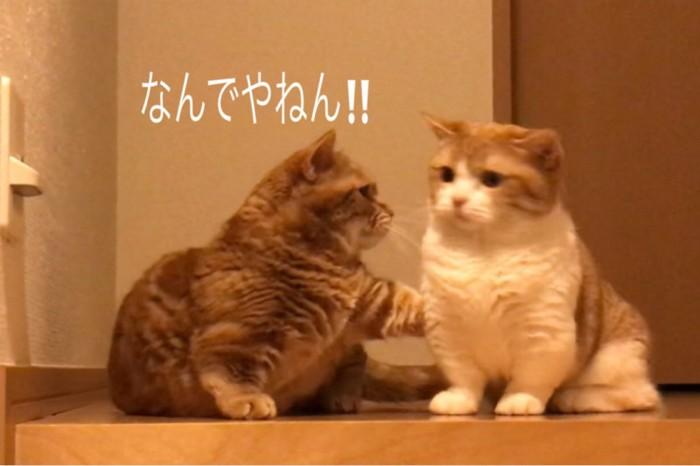 茶太郎ときなこの写真5