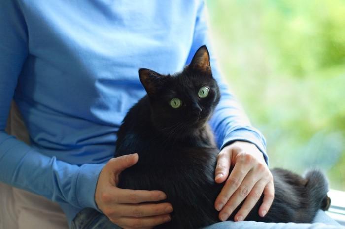 女性の膝に抱かれて振り返る黒猫