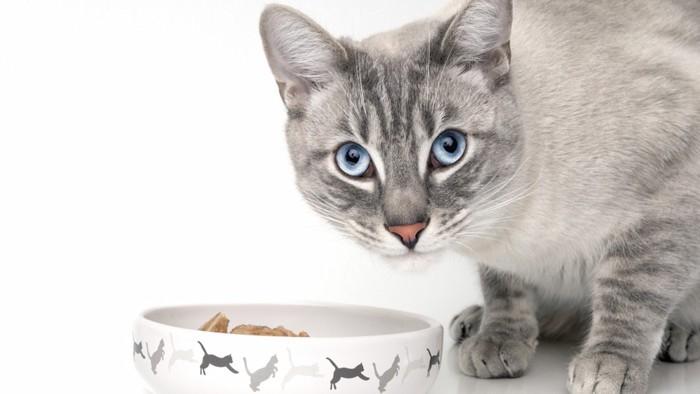 みつめる猫