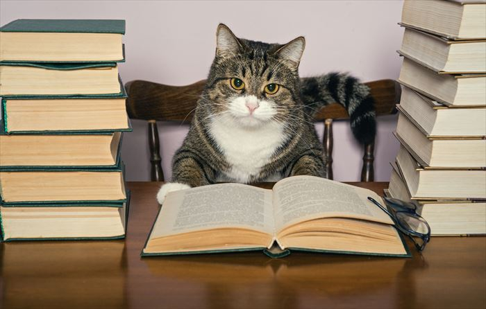 読書中の猫