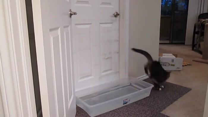失敗する猫