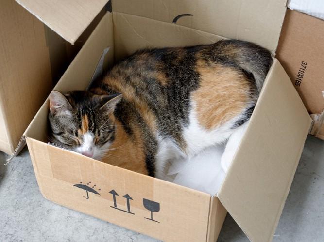 箱に入る猫