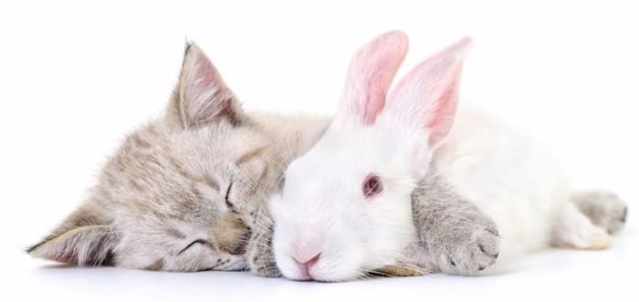 横になる猫とウサギ
