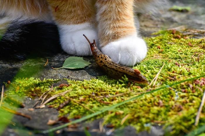 猫の足元にいるナメクジ
