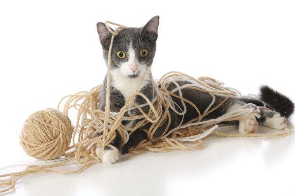 毛糸だらけの猫