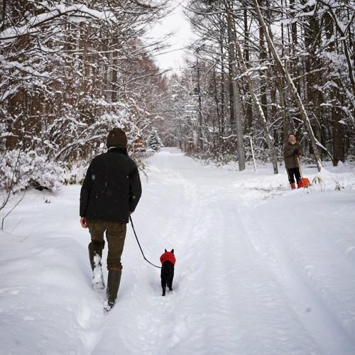雪の中を歩くノロ