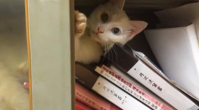 荒らされた書類とカメラを見つめる猫